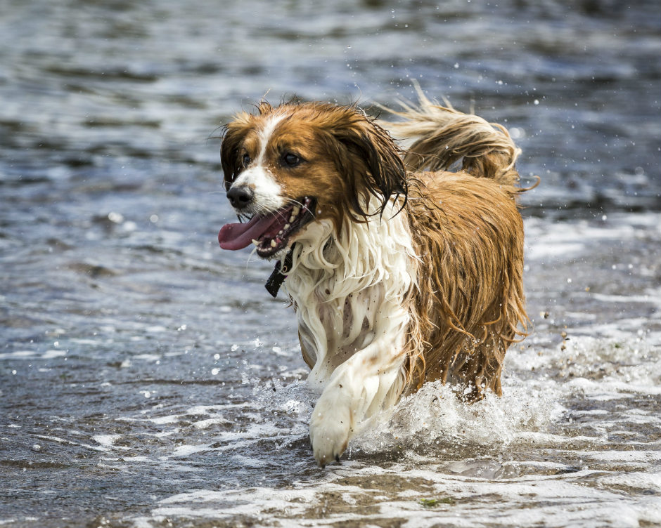 10 tips to keep your dog cool in summer