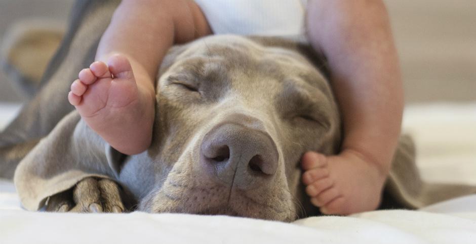 Beb s y perros en casa fundaci n affinity - Mascotas en casa ...