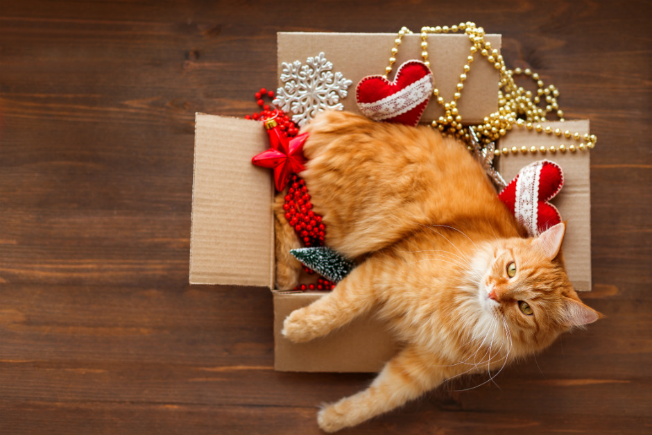 How to get your kitty away from the Christmas tree?