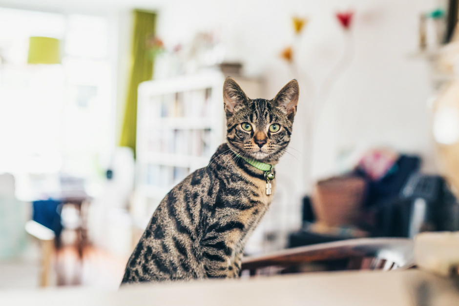 How to create the ideal environment for the well-being of your cat