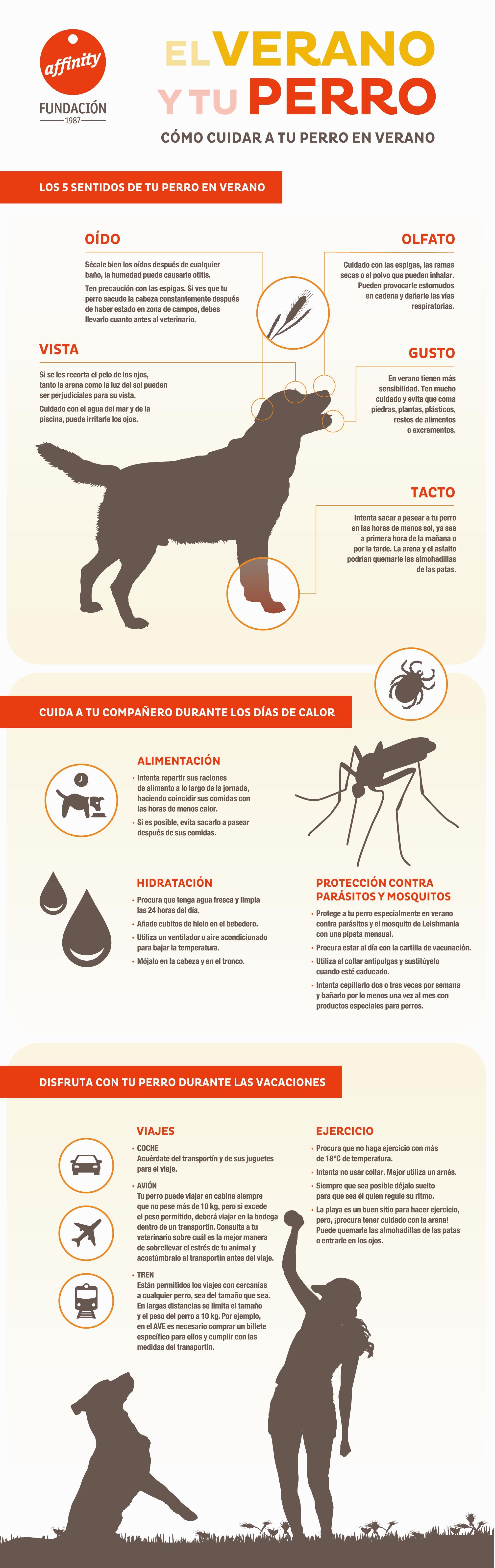 Infografía como cuidar de tu perro en verano