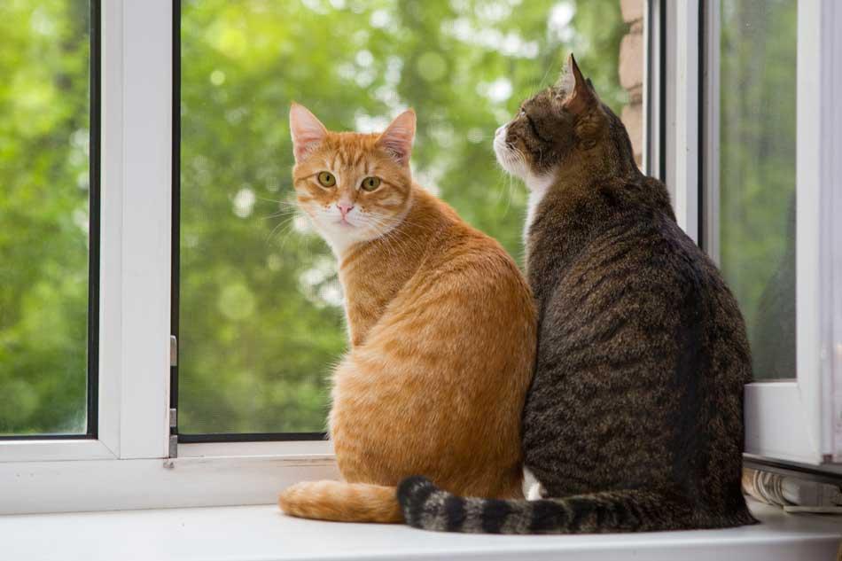 Descubre cómo se comporta un gato !! | Fundación Affinity