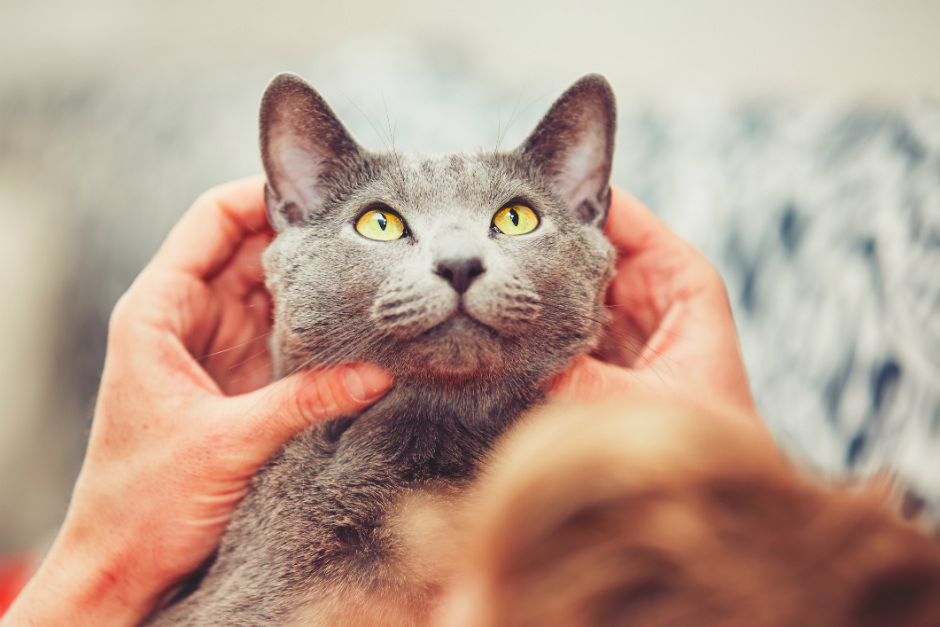 Dónde puedo acariciar a un gato?   Fundación Affinity