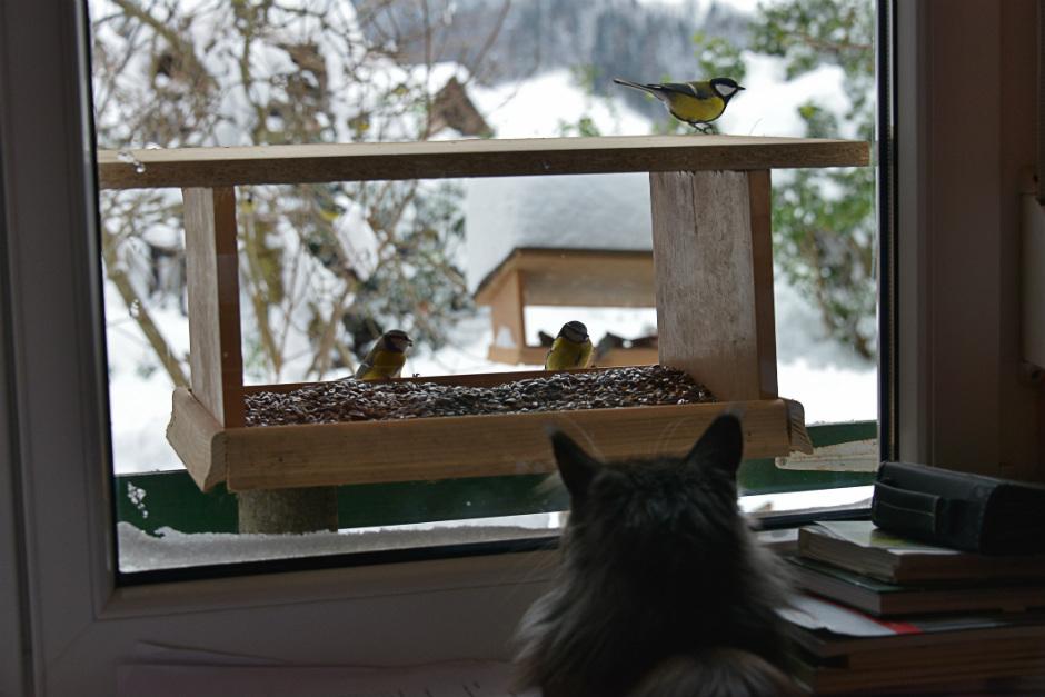 El gato en casa necesita estimulaci n sensorial - El gato en casa ...