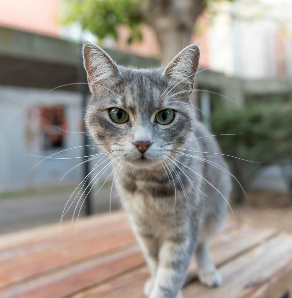 El Gato Necesita Tener Acceso Al Exterior Fundación Affinity