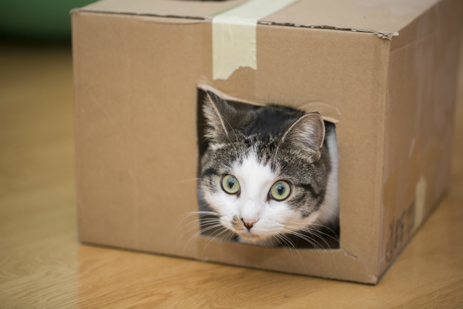 Is it important to adapt the house to the needs of the cat?