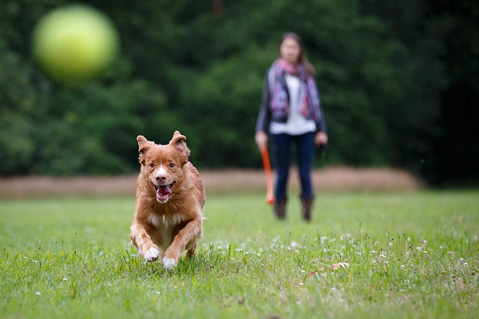 No tengo jard n ni terraza puedo tener perro fundaci n affinity - Perros para tener en casa ...