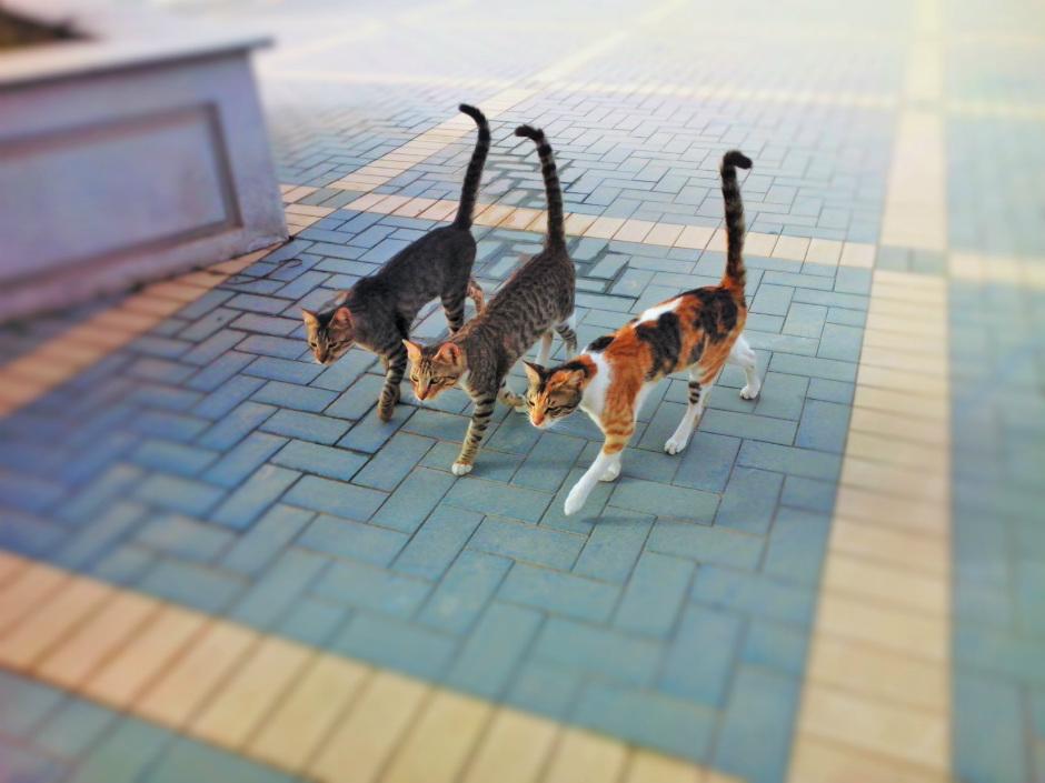 problemas con gatos del vecino