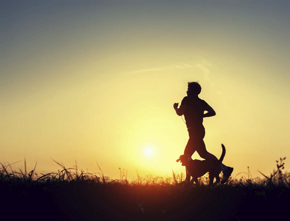 benefits of training with a dog