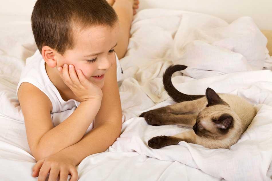 TODO SOBRE LOS GATOS - Página 5 Los-12-consejos-para-llevarse-bien-con-un-gato