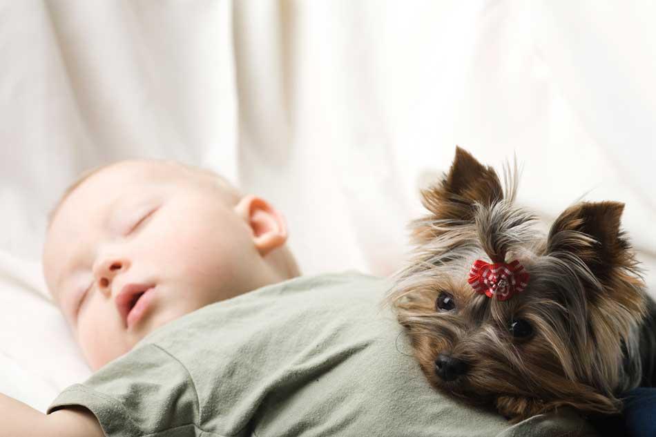 789a4b522 Preparar el perro para la llegada del bebé