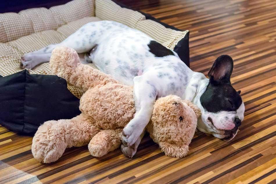 Primera noche de mi perro en casa fundaci n affinity for Vallas para perros en casa