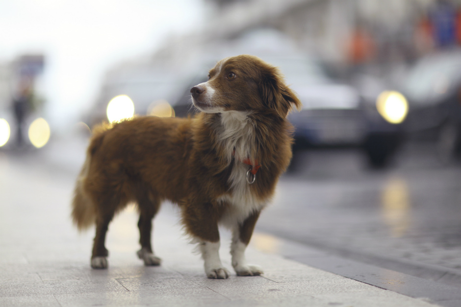 What to do if you find a lost or abandoned dog?