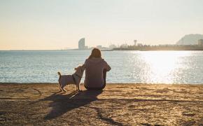 Cómo y dónde encontrar perros en adopción en Barcelona