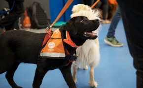 Beneficios de usar perros en terapias asistidas- Fundación Affinity