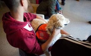 Beneficios del vínculo entre animals y personas