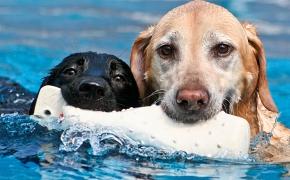 Abre sus puertas el primer Aqua Park Canino de Cataluña