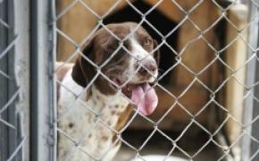 Principales causes de l'abandon d'un animal de compagnie