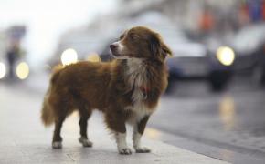 Que faire si vous trouvez un chien perdu