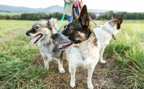¿Cómo puedo formarme para trabajar en el ámbito de la Terapia Asistida con Animales (TAA)?