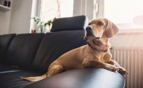Cómo tratar la ansiedad por separación en perros