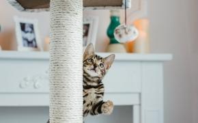 Conoce cómo colocar las cosas de tu gato en casa