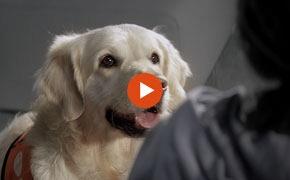 Descubre #AnimalesQueCuran, nuestra causa de este año