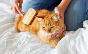 El cepillado reduce la bolas de pelo en los gatos