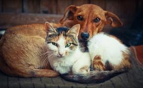 El Congreso apoya cambiar el Código Civil para que los animales se consideren seres sensibles y no cosas #AnimalesNOsonCosas