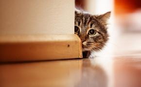 Check List para preparar la llegada a de un animal de compañía