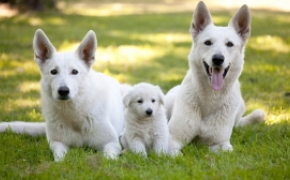 ¿Perro cachorro, adulto o senior?