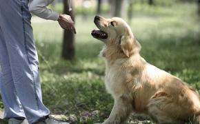 A quién está destinada la intervención asistida con animales
