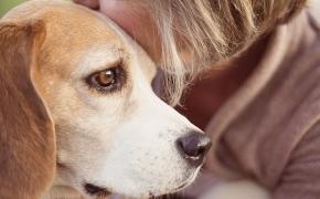 Personas mayores y mascotas: una nueva vida
