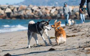 Prepárate para el verano con las playas de perros