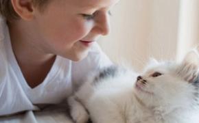 Fundación Affinity y Observatorio Justicia y Defensa Animal se unen para que los animales dejen de ser cosas