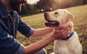 liens émotionnels avec votre animal de compagnie