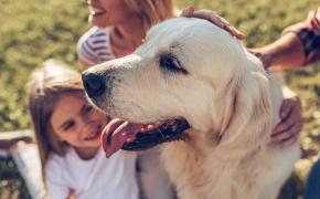 Limitaciones terapias asistidas con animales