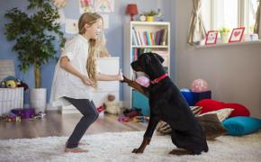 Los beneficios de adiestrar a un perro en positivo