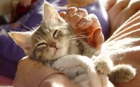 ¿Los gatos son adecuados para las personas mayores?