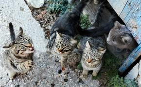 Más de 104.000 perros y de 33.300 gatos fueron abandonados en 2016, una cifra estancada, según Fundación Affinity