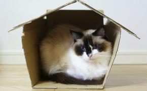Première nuit du chaton à la maison