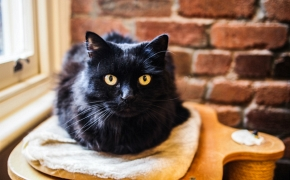¿Qué piensas sobre los gatos negros?