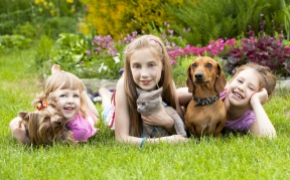 Qué tener en cuenta antes de adoptar un animal de compañia