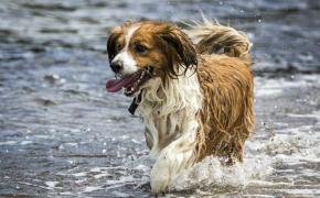 conseils pour rafraîchir votre chien en été