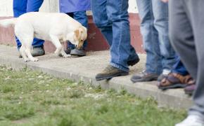 Terapias con perros en centros penitenciarios