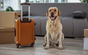 Viajar con animales de compañía en España