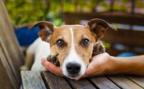 Vida Verde: Los animales no son cosas