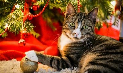 5 formas de proteger tu árbol de Navidad si tienes un gato