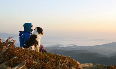 Consejos imprescindibles para viajar con animales de compañía