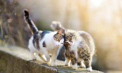 Qué son los gatos ferales y por qué son importantes para nuestra sociedad